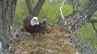 Decorah Eagles