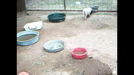 Best Tiny Pigs: Live Action 09/03/10 09:48AM
