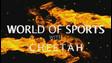 World Of Sports w/ Cheetah