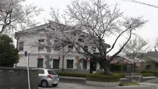 桜だより(1)小弓の庄