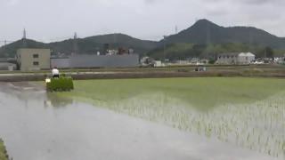 H26田植え3・犬山羽黒栄